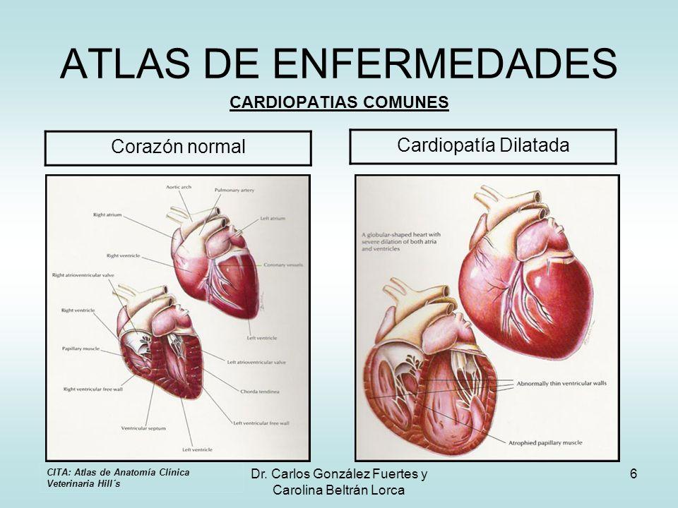 Dr. Carlos González Fuertes y Carolina Beltrán Lorca