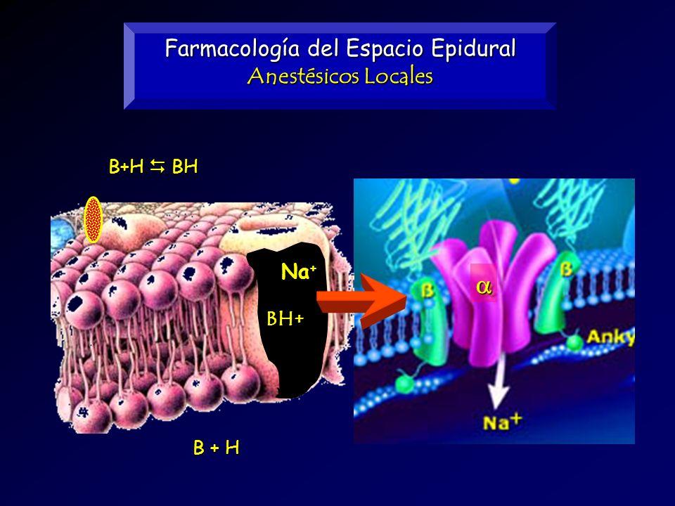 Farmacología del Espacio Epidural