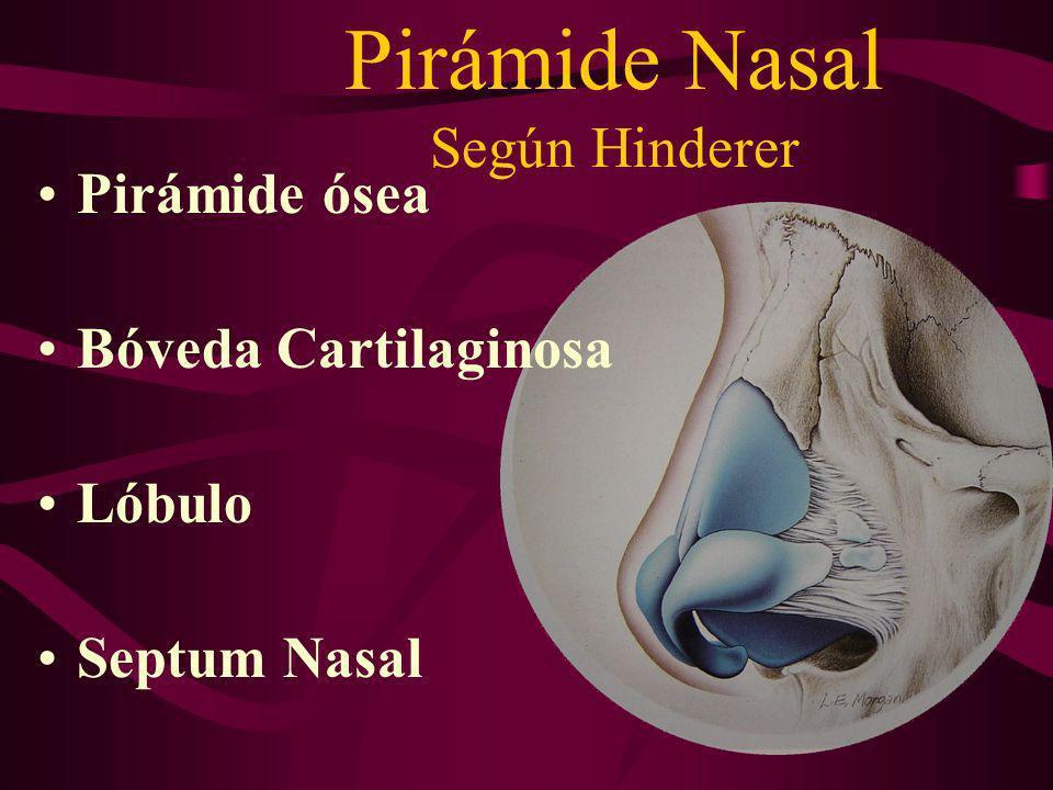 Pirámide Nasal Según Hinderer
