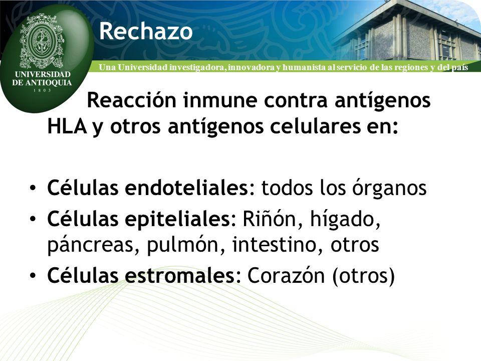 Rechazo Reacción inmune contra antígenos HLA y otros antígenos celulares en: Células endoteliales: todos los órganos.