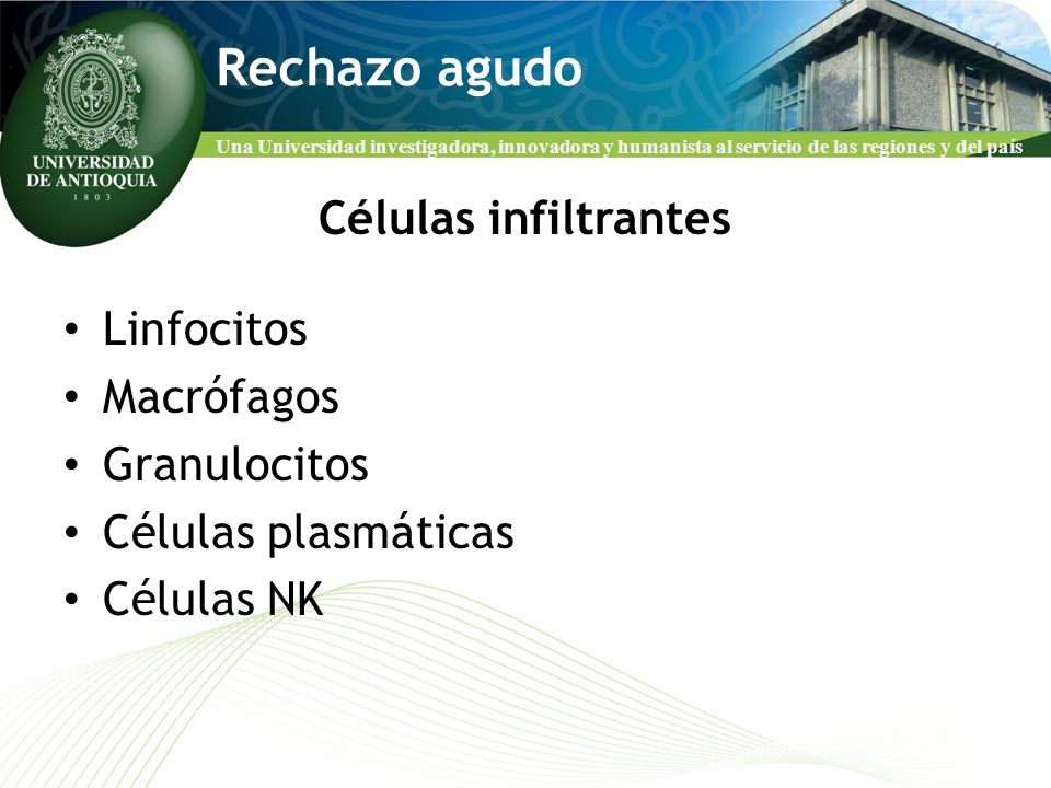 Rechazo agudo Células infiltrantes Linfocitos Macrófagos Granulocitos