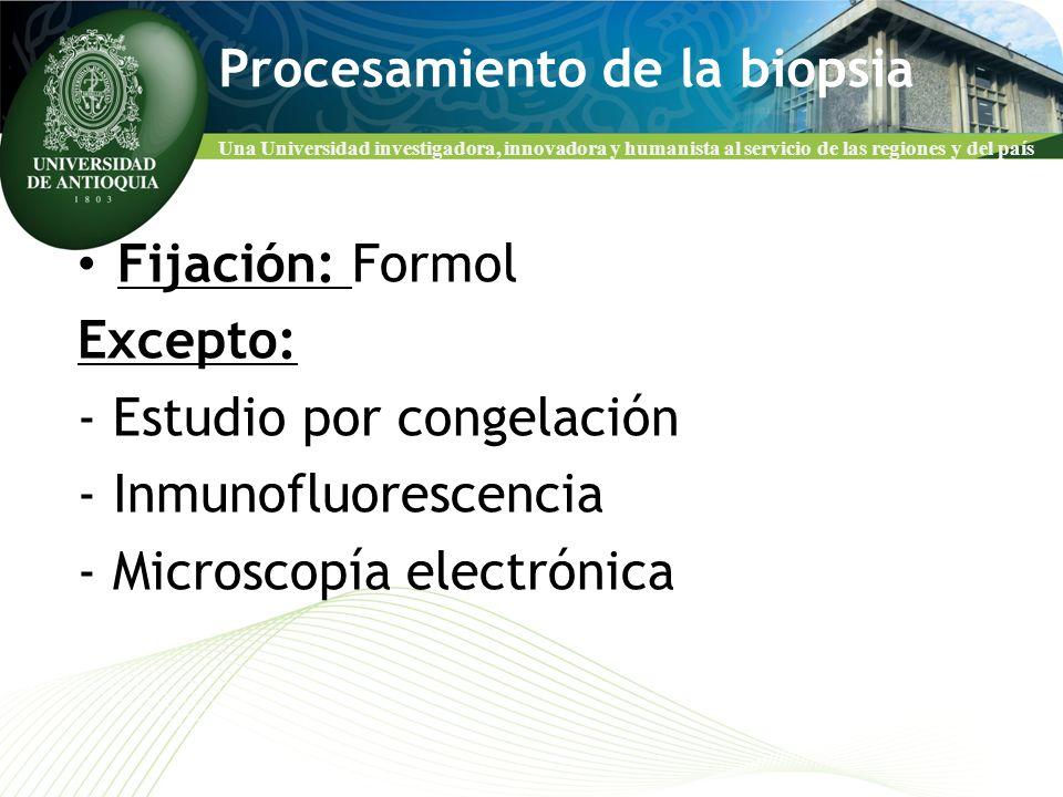 Procesamiento de la biopsia
