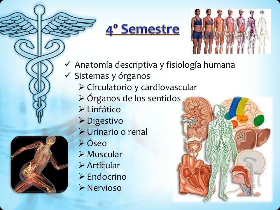 4º Semestre Anatomía descriptiva y fisiología humana