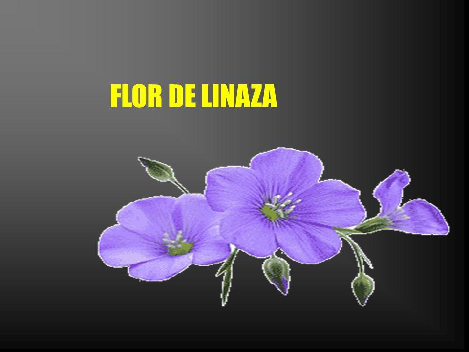 FLOR DE LINAZA
