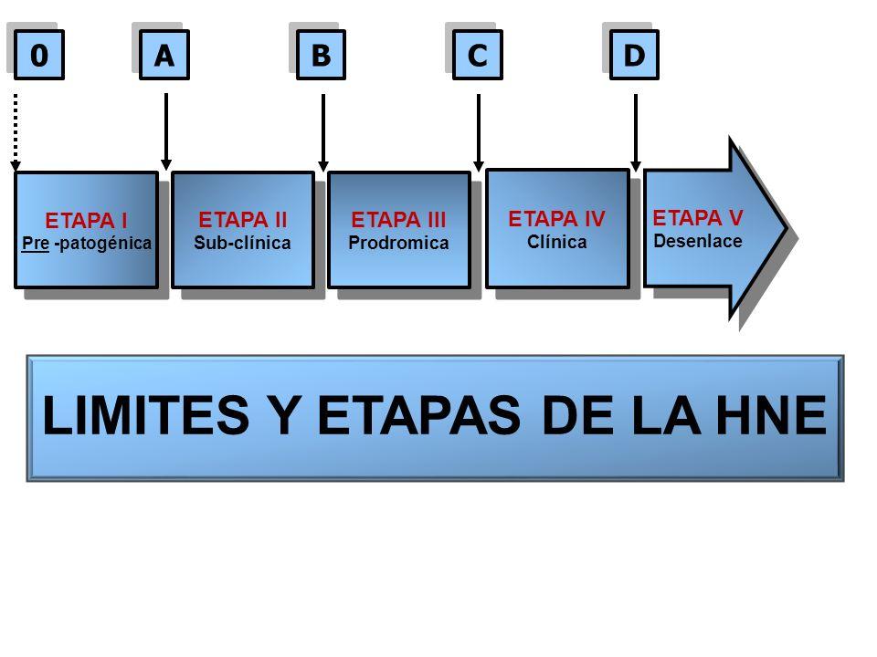 LIMITES Y ETAPAS DE LA HNE