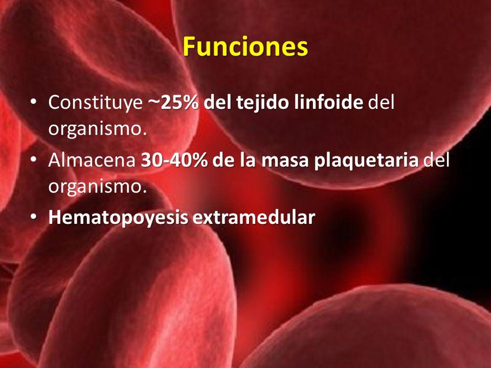 Funciones Constituye ~25% del tejido linfoide del organismo.