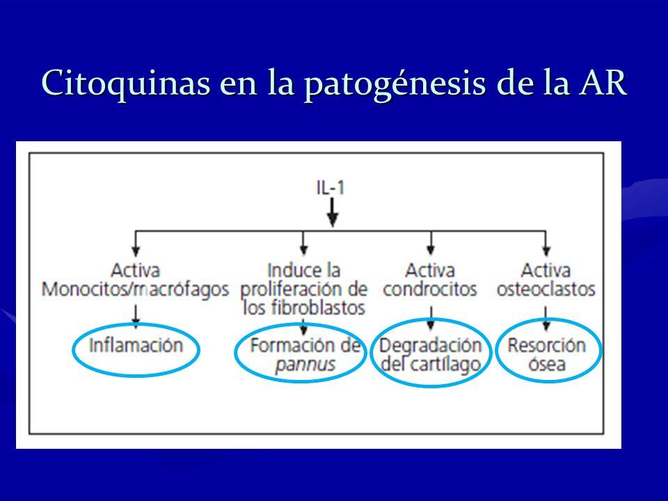 Citoquinas en la patogénesis de la AR