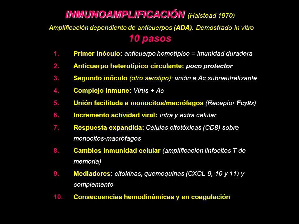 INMUNOAMPLIFICACIÓN (Halstead 1970) Amplificación dependiente de anticuerpos (ADA). Demostrado in vitro 10 pasos