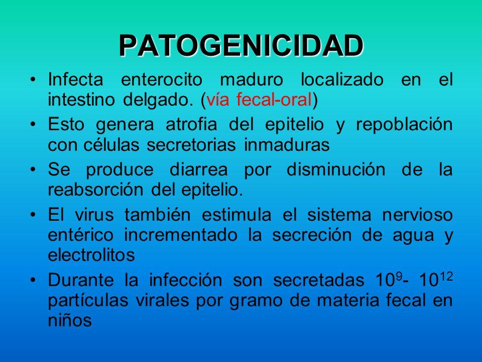 PATOGENICIDAD Infecta enterocito maduro localizado en el intestino delgado. (vía fecal-oral)