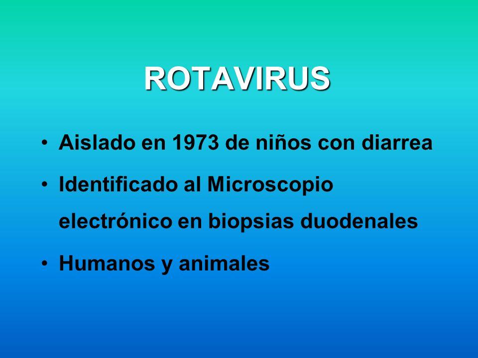 ROTAVIRUS Aislado en 1973 de niños con diarrea