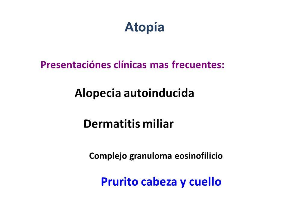 Alopecia autoinducida Dermatitis miliar