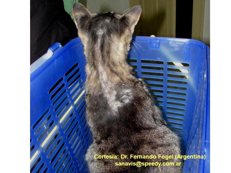 Cortesia: Dr. Fernando Fogel (Argentina)
