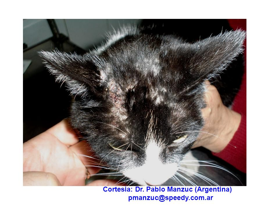 Cortesia: Dr. Pablo Manzuc (Argentina)