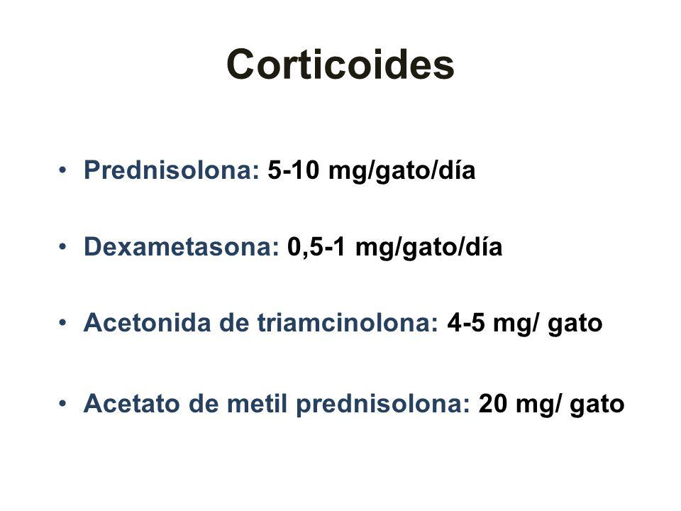 Corticoides Prednisolona: 5-10 mg/gato/día