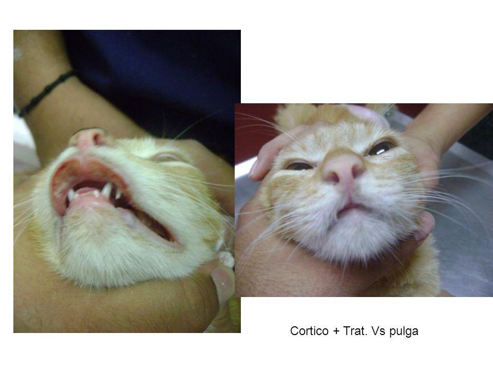 Cortico + Trat. Vs pulga