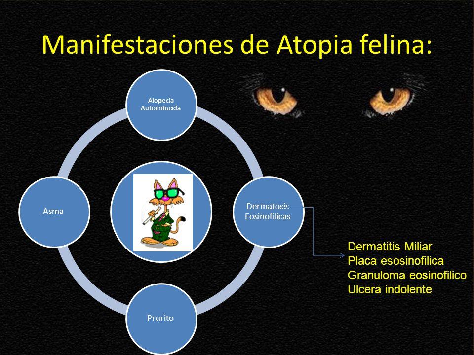 Manifestaciones de Atopia felina: