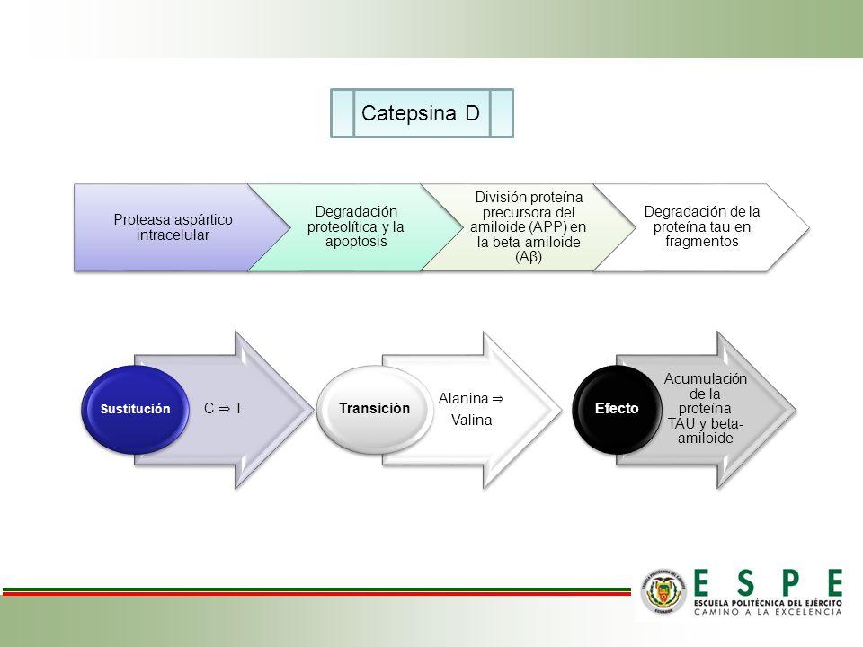 Catepsina D Proteasa aspártico intracelular