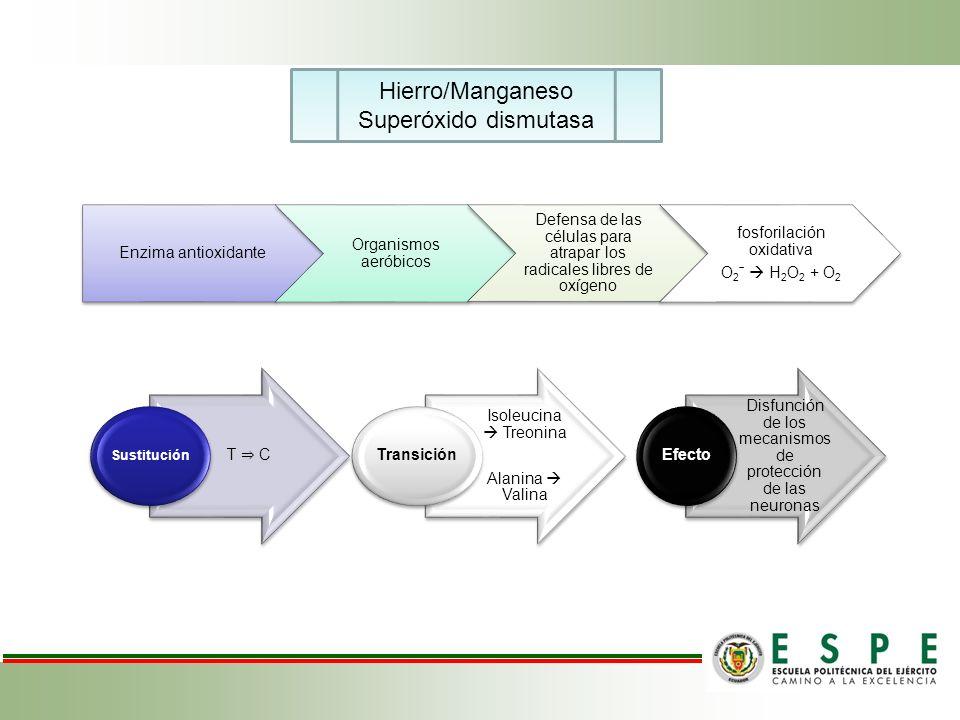 Hierro/Manganeso Superóxido dismutasa