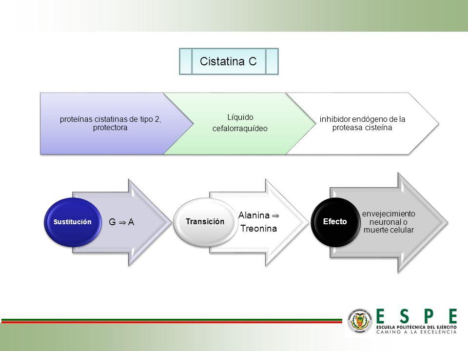 Cistatina C Alanina ⇒ G ⇒ A Treonina