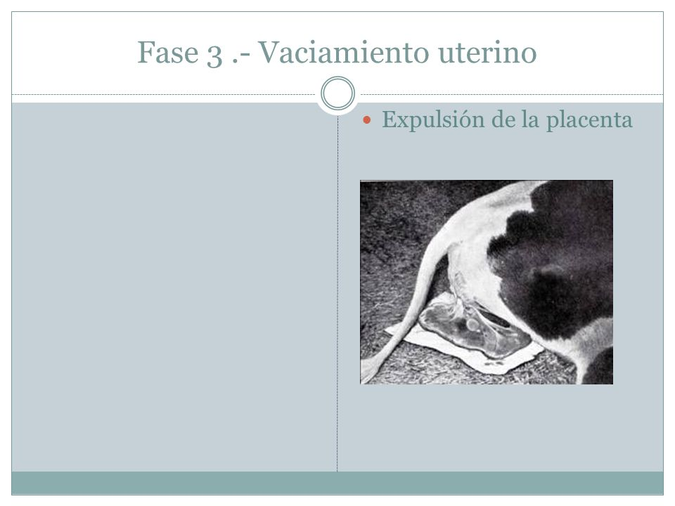 Fase 3 .- Vaciamiento uterino