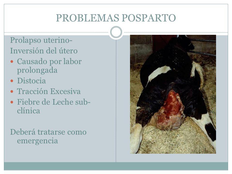PROBLEMAS POSPARTO Prolapso uterino- Inversión del útero