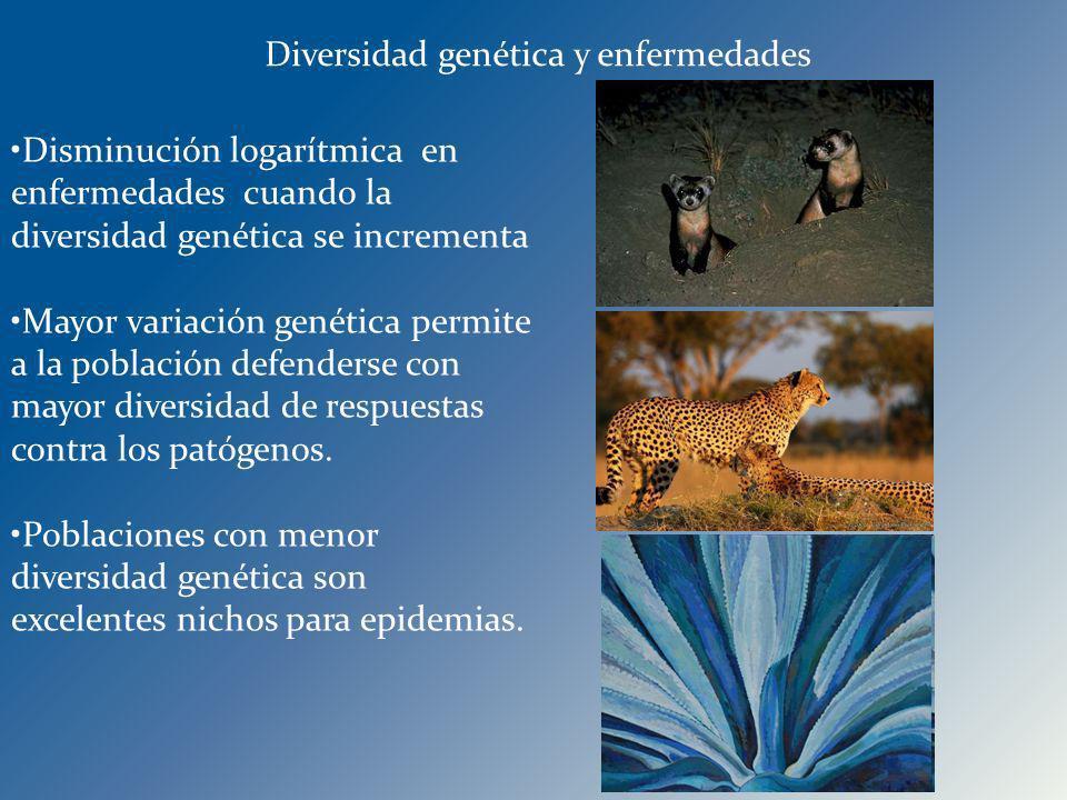 Diversidad genética y enfermedades