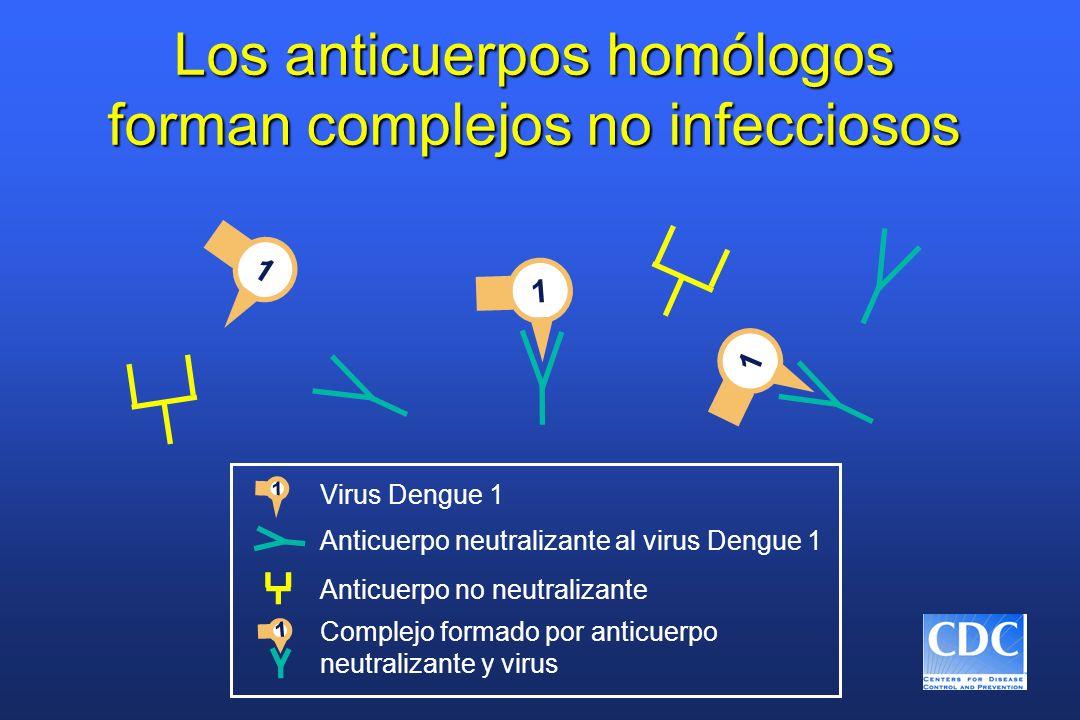 Los anticuerpos homólogos forman complejos no infecciosos