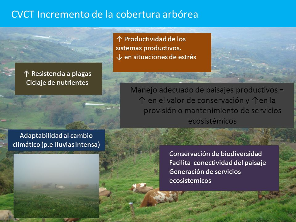 CVCT Incremento de la cobertura arbórea