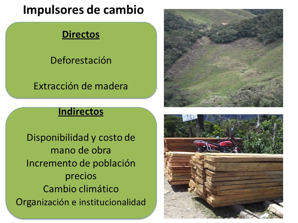 Impulsores de cambio Directos Deforestación Extracción de madera