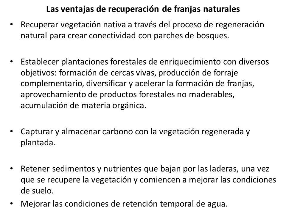 Las ventajas de recuperación de franjas naturales