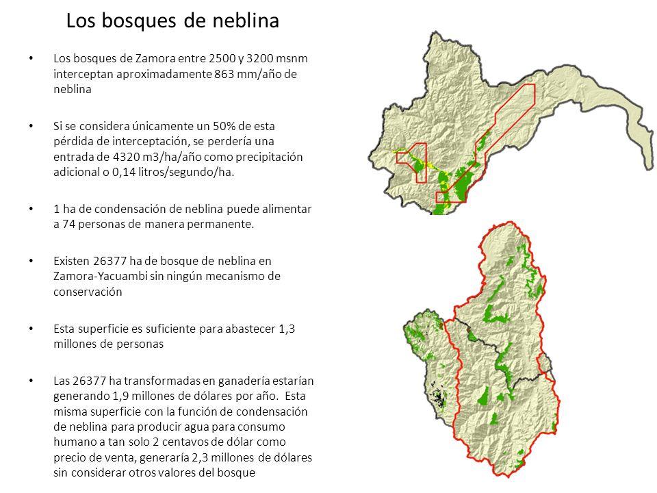Los bosques de neblina Los bosques de Zamora entre 2500 y 3200 msnm interceptan aproximadamente 863 mm/año de neblina.