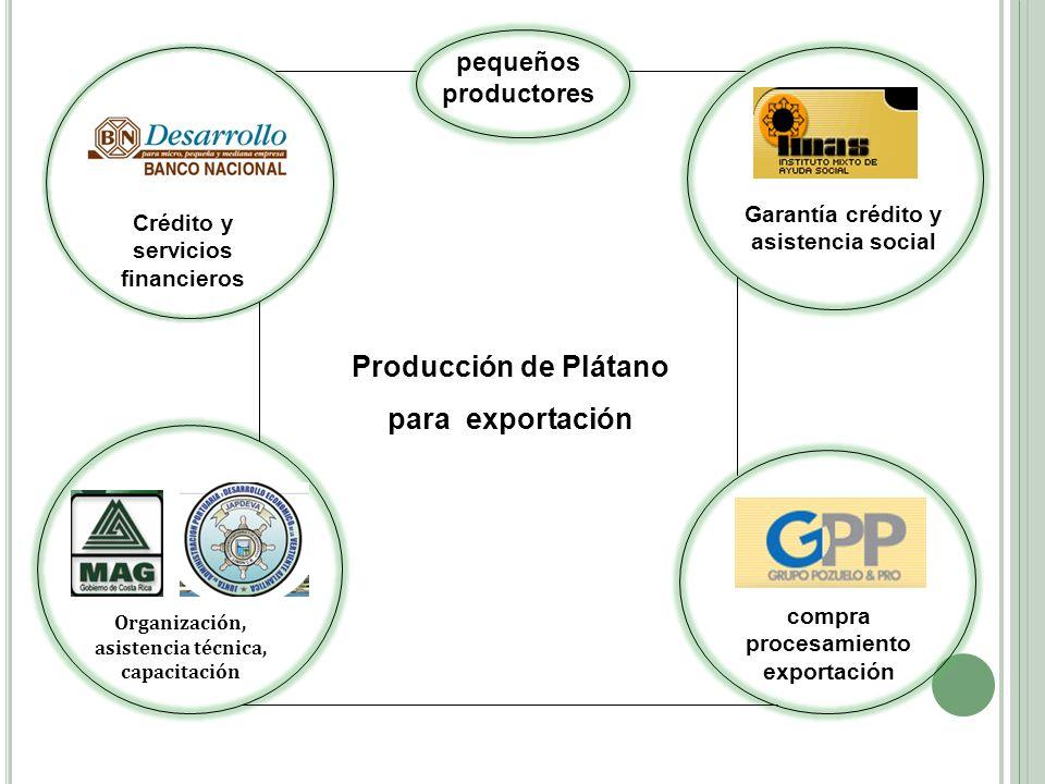 Producción de Plátano para exportación