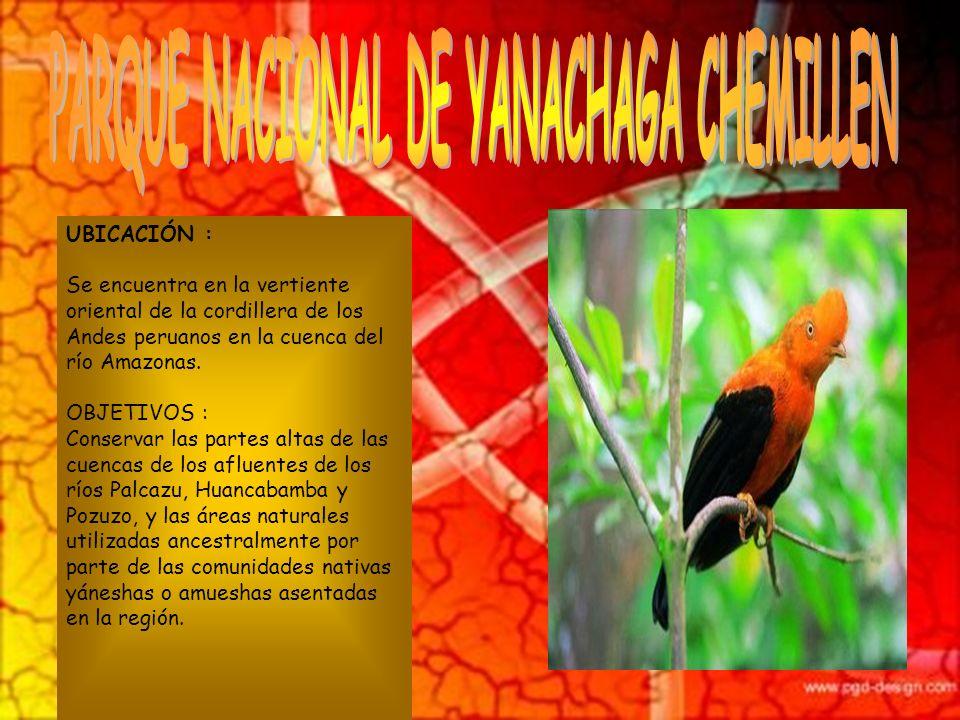 PARQUE NACIONAL DE YANACHAGA CHEMILLEN