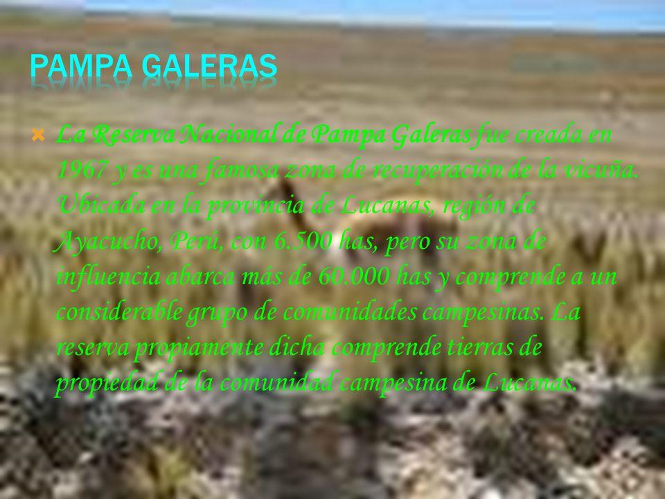 PAMPA GALERAS
