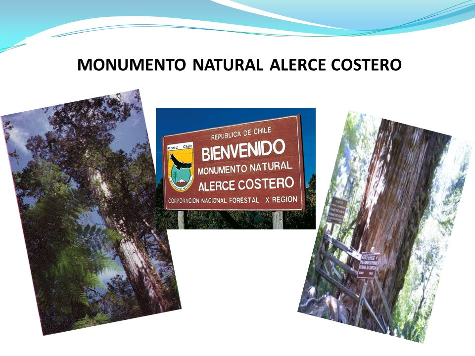 MONUMENTO NATURAL ALERCE COSTERO