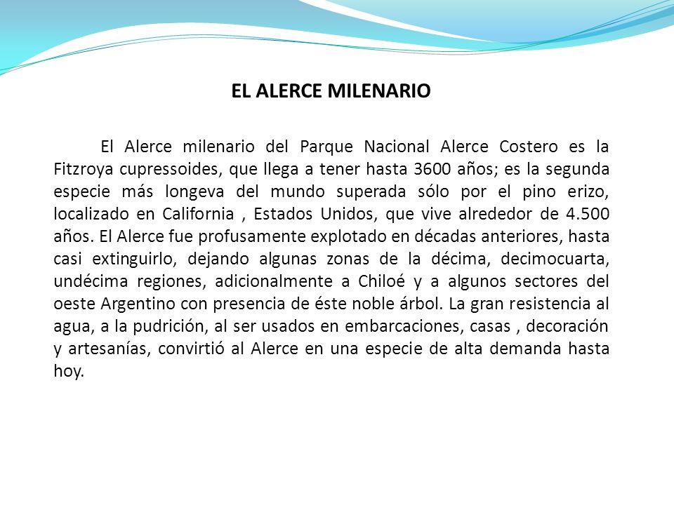 EL ALERCE MILENARIO