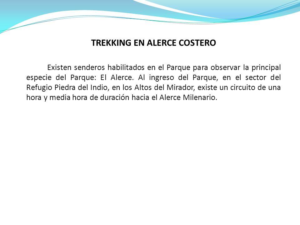 TREKKING EN ALERCE COSTERO