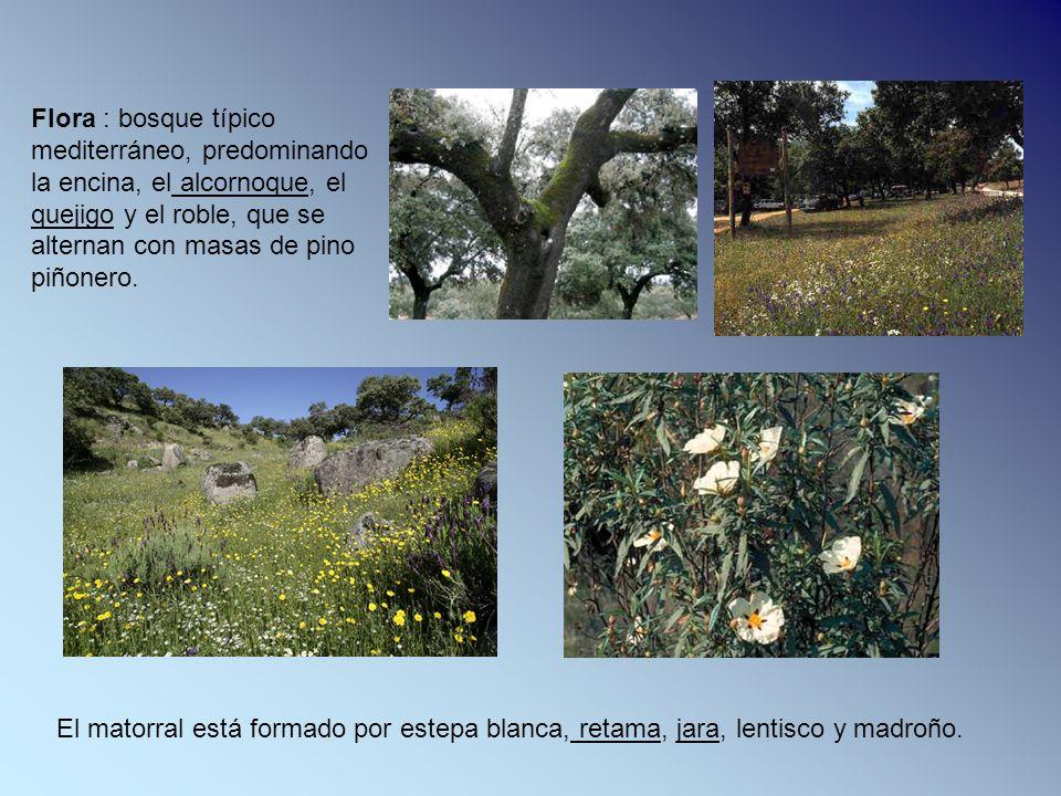 Flora : bosque típico mediterráneo, predominando la encina, el alcornoque, el quejigo y el roble, que se alternan con masas de pino piñonero.