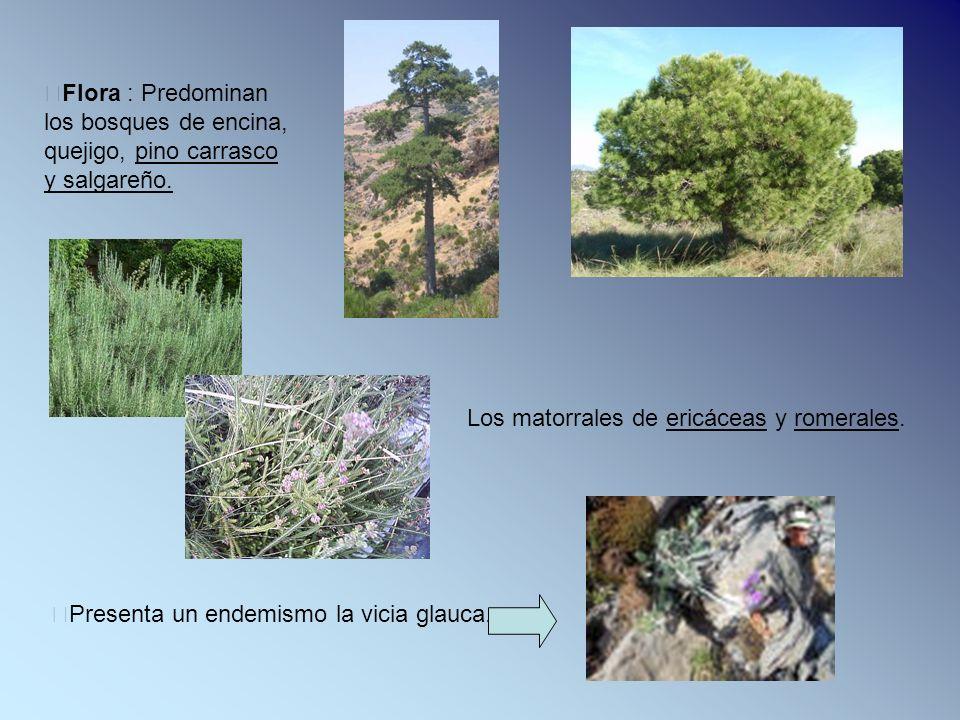 Flora : Predominan los bosques de encina, quejigo, pino carrasco y salgareño.