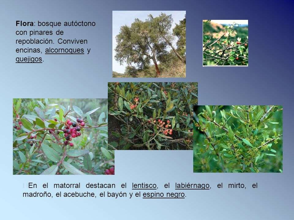 Flora: bosque autóctono con pinares de repoblación