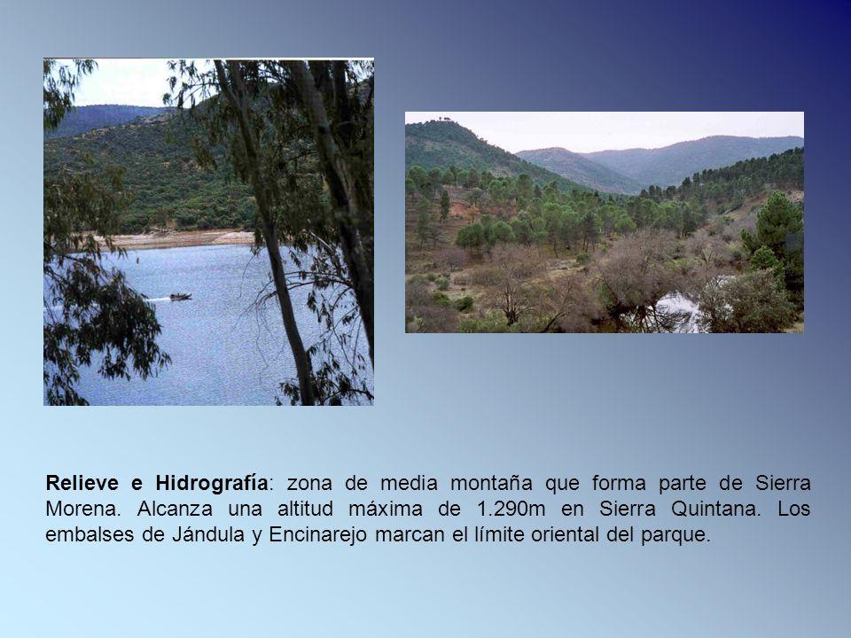 Relieve e Hidrografía: zona de media montaña que forma parte de Sierra Morena.