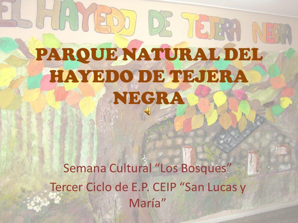 PARQUE NATURAL DEL HAYEDO DE TEJERA NEGRA
