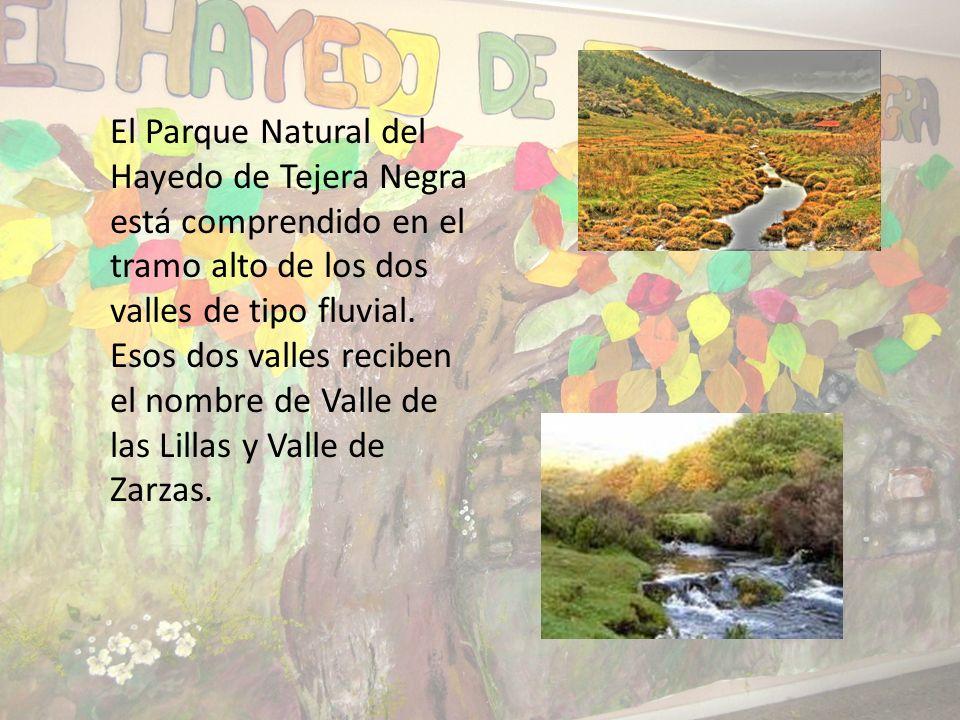 El Parque Natural del Hayedo de Tejera Negra está comprendido en el tramo alto de los dos valles de tipo fluvial.