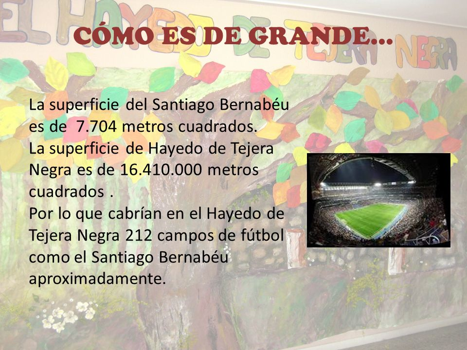 CÓMO ES DE GRANDE… La superficie del Santiago Bernabéu es de 7.704 metros cuadrados.