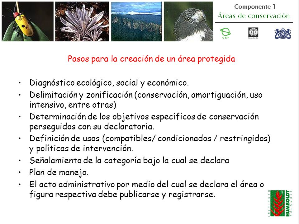 Pasos para la creación de un área protegida