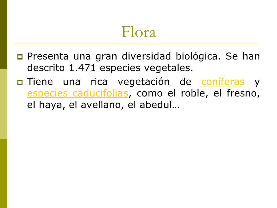 Flora Presenta una gran diversidad biológica. Se han descrito 1.471 especies vegetales.