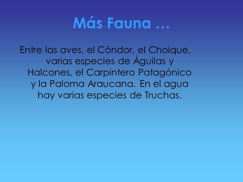 Más Fauna …