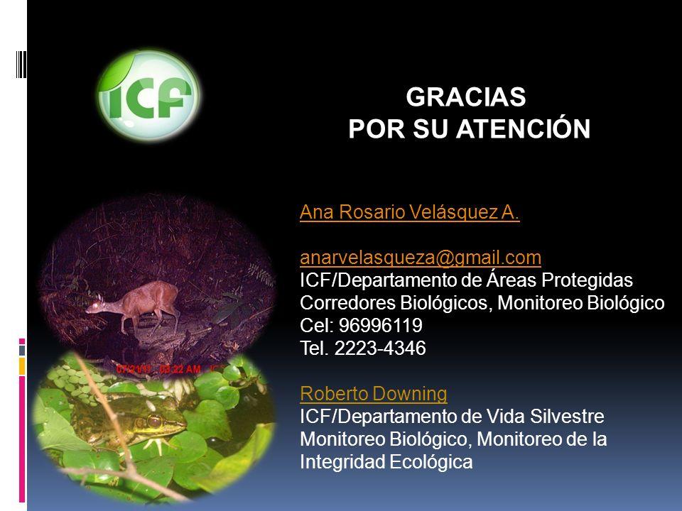 GRACIAS POR SU ATENCIÓN Ana Rosario Velásquez A.