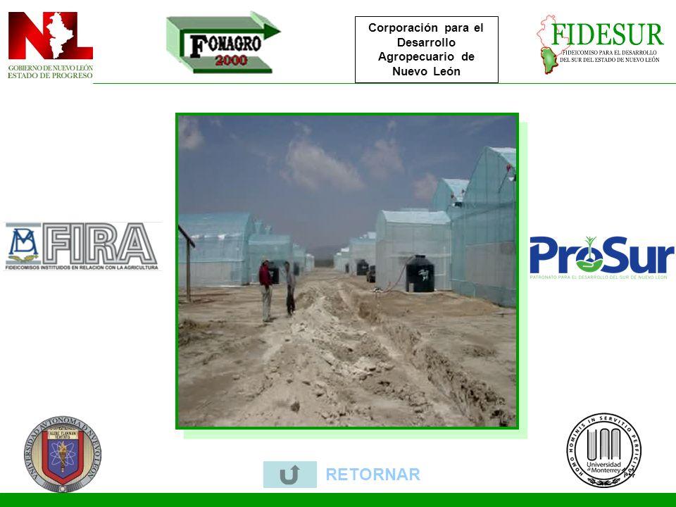 Corporación para el Desarrollo Agropecuario de Nuevo León