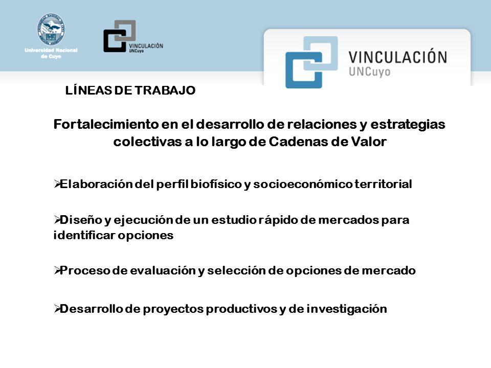 LÍNEAS DE TRABAJO Fortalecimiento en el desarrollo de relaciones y estrategias colectivas a lo largo de Cadenas de Valor.